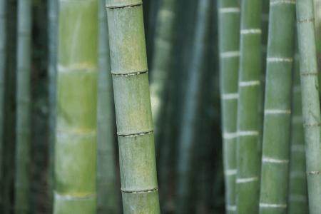 Bamboe Kussen Ervaringen : Bamboe kussen tegen snurken een effectieve oplossing